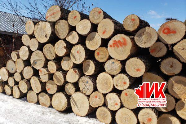 Ash wood - VK Global Trading