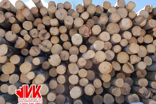 Beech wood - VK Global Trading