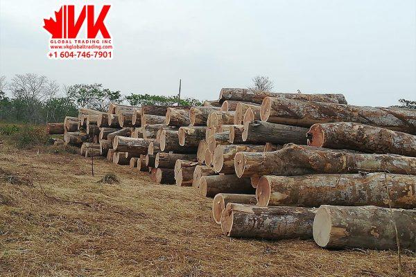 Bass wood - VK Global Trading