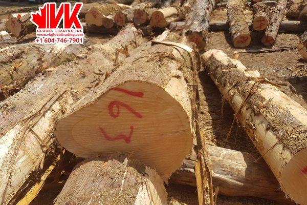 Cypress wood - VK Global Trading