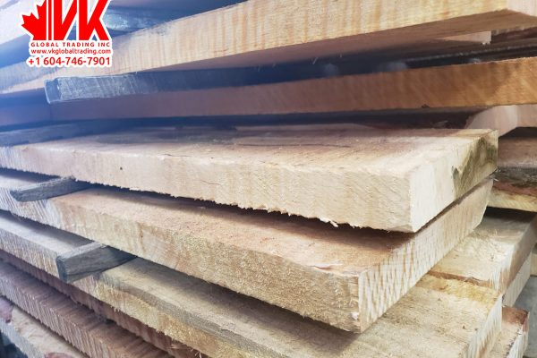 Curly Hard Maple - VK Global Trading