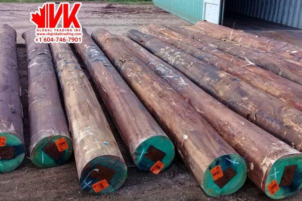 Eucalyptus wood - VK Global Trading