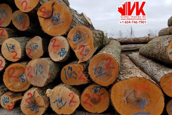Hard Maple wood - VK Global Trading