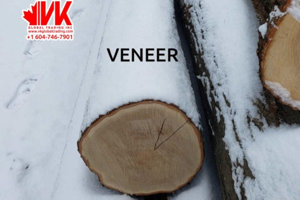 Red Oak Veneer - VK Global Trading
