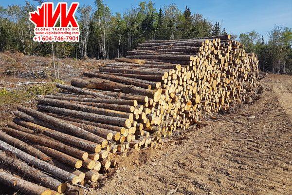 Spruce Pine Fir wood - VK Global Trading