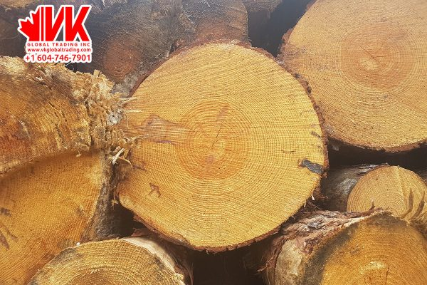 Southern Yellow Pine - VK Global Trading